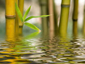 Bamboo water reflection — Stock Photo