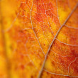 Stock Photo: Beautiful autumn leaf macro