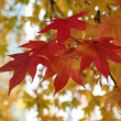 Beautiful autumn red and yellow leaves — Stock Photo