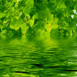 Stock Photo: Beautiful oak tree and water