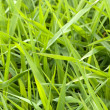 Stock Photo: Beautiful fresh grass background