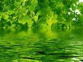 Beautiful oak tree and water — Stock Photo