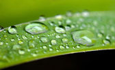 Rain drops on leaves — Stock Photo