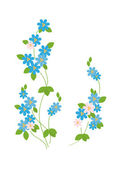 The blue flowers of forget-me - — Stock Vector