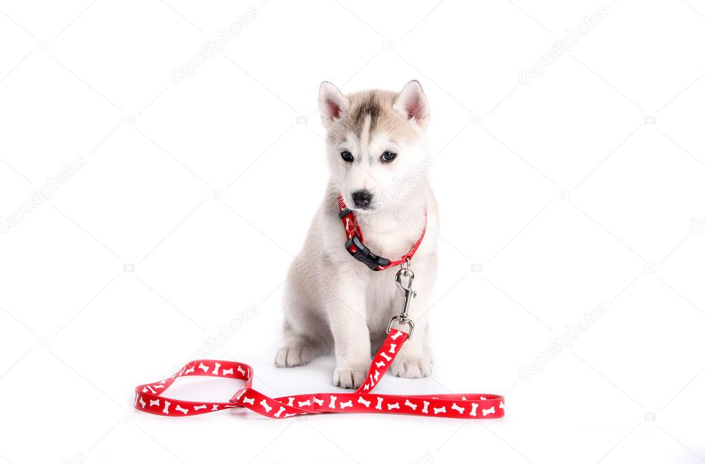 Puppy — Stock Photo #2285355