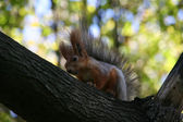 The squirrel sitting on a tree — Stock Photo