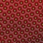 makro jordgubb — Stockfoto