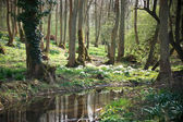 Stream flowing through woodland — Foto Stock
