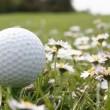Royalty-Free Stock Photo: Golf ball in flowers