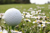 Golf ball in flowers — Stock Photo
