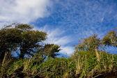 Sahil şeridi — Stok fotoğraf