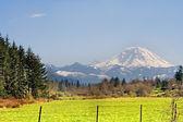 Mt. Rainier viewed from across a field — Stock Photo
