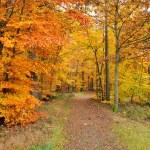 cores de outono — Foto Stock