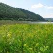 Stock Photo: Meadow on river
