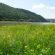 Meadow on the river — Stock Photo #2511879