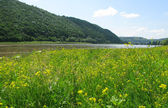 Meadow on the river — Stock Photo
