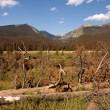 Stock Photo: Dead tree and mountains