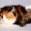 Snow cat — Stock Photo