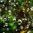Waterdrops on spider web — Stock Photo
