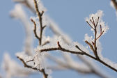Ice-covered branches of tree — Stock Photo