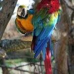 Parrots — Stock Photo #2295381