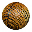 TigerGolfBall — Stock Photo #2295484