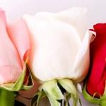 Beauty flowers — Stock Photo
