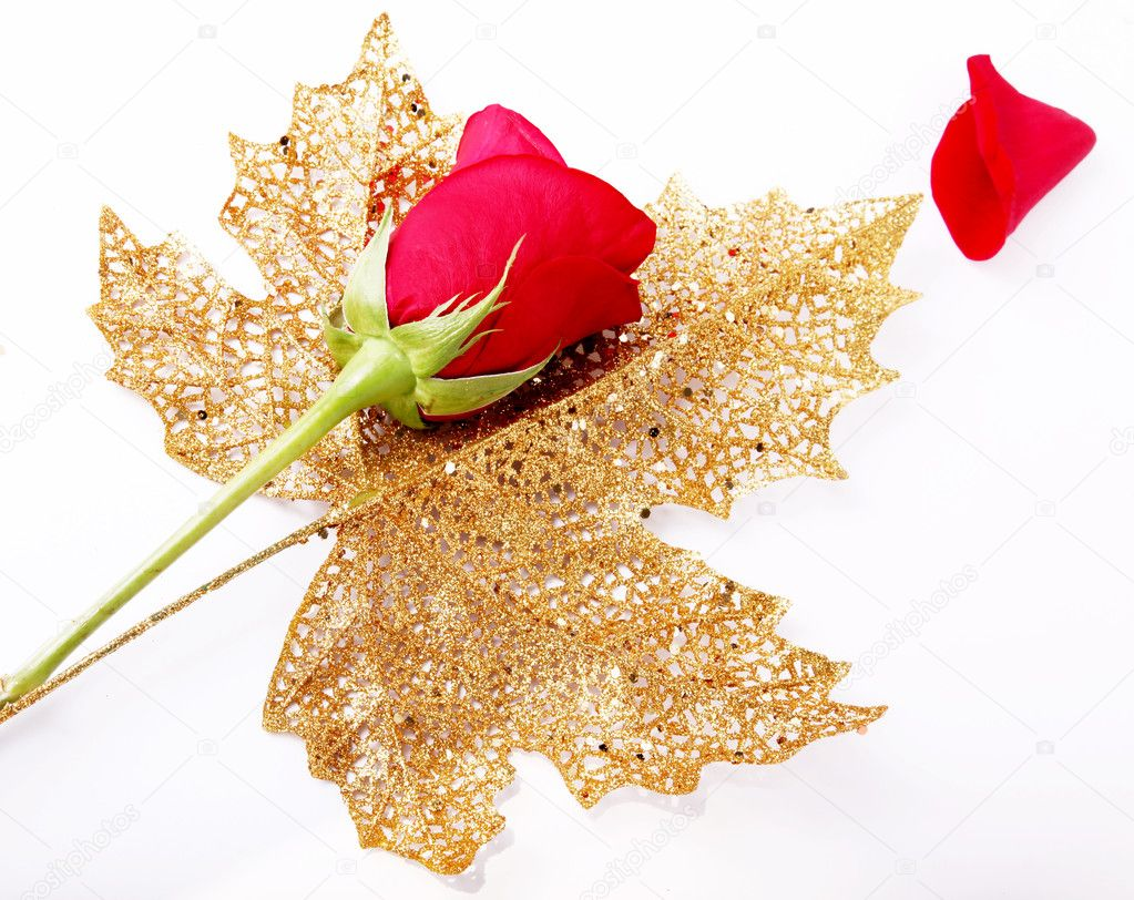 Red rose on golden leaf, flower image  Stock Photo #2543395