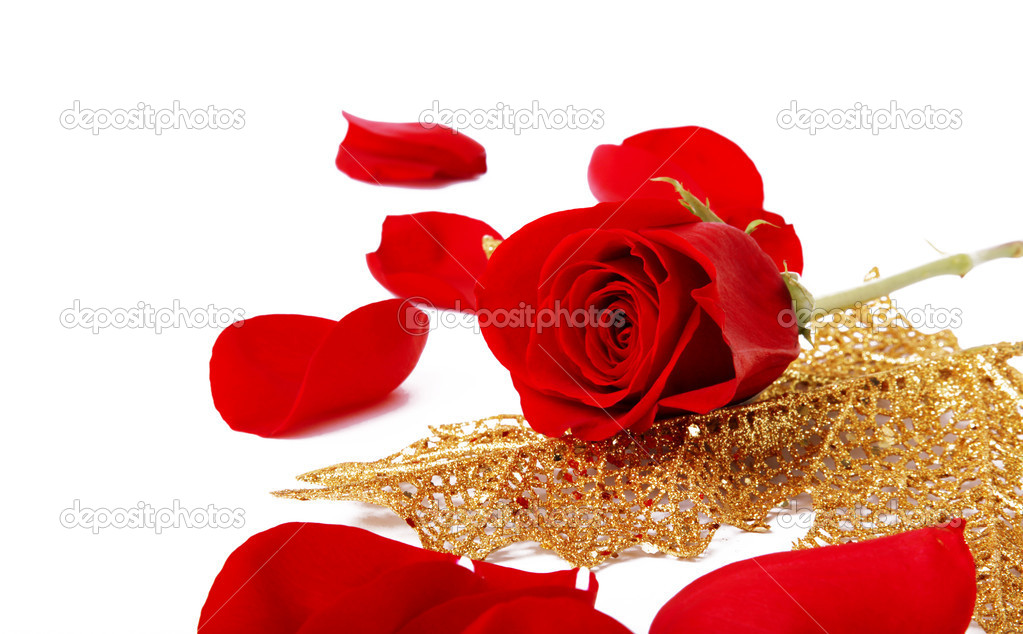 Red rose on a golden leaf. White Background — Stok fotoğraf #2543401