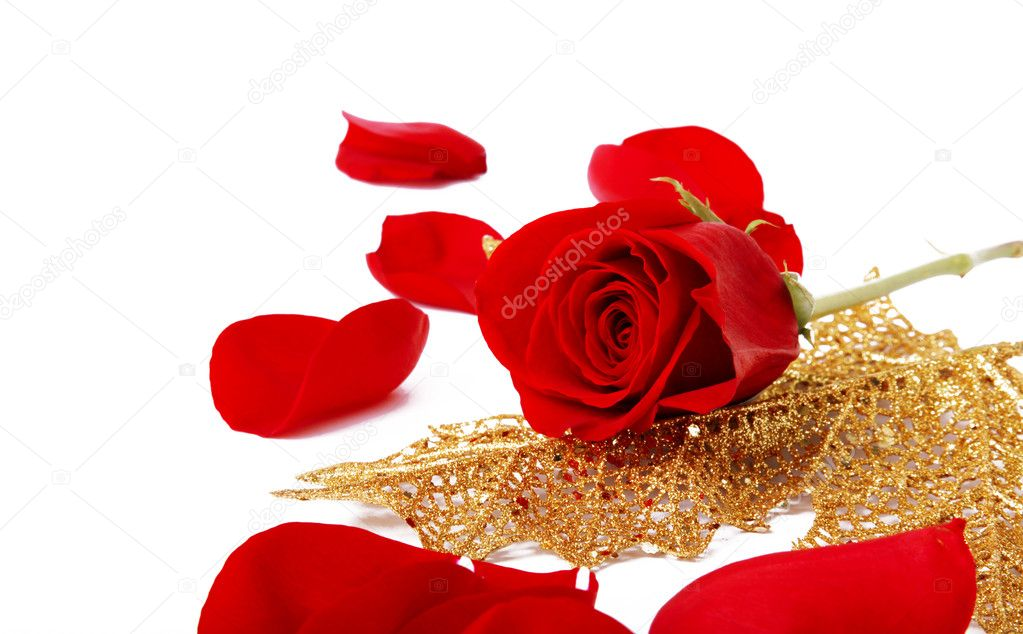 Red rose on a golden leaf. White Background  Photo #2543401