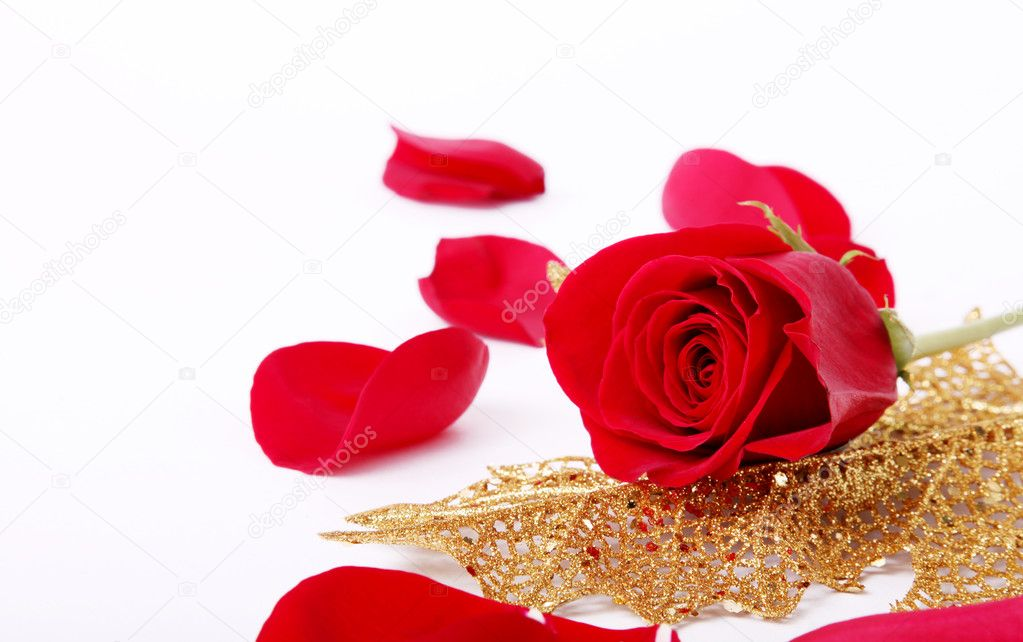 Red rose with golden leaf on white background — Stock Photo #2543406