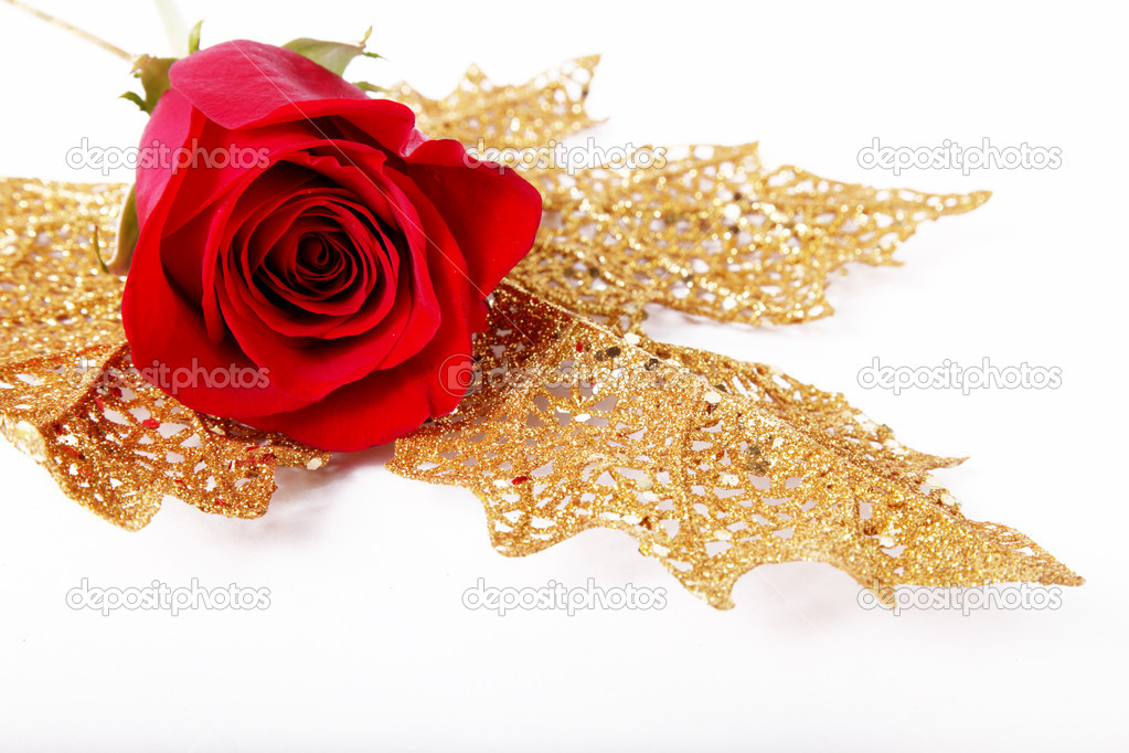 Red rose with petals around. white background. On a golden leaf. — Zdjęcie stockowe #2543417