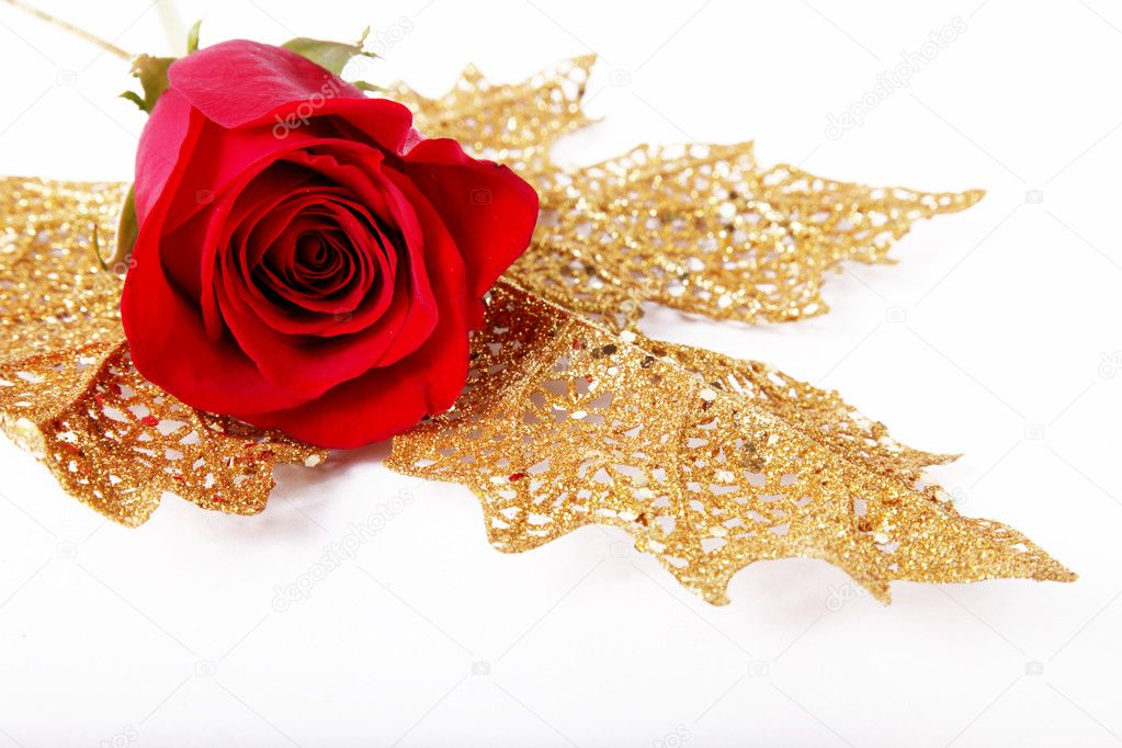 Red rose with petals around. white background. On a golden leaf.  Stockfoto #2543417