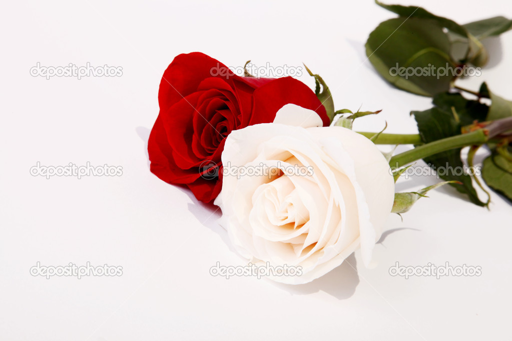 Couple of roses. Representation of love. Beautiful image for a card — Photo #2543430