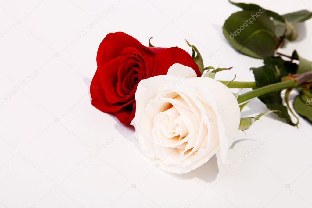 Couple of roses. Representation of love. Beautiful image for a card — Lizenzfreies Foto #2543430