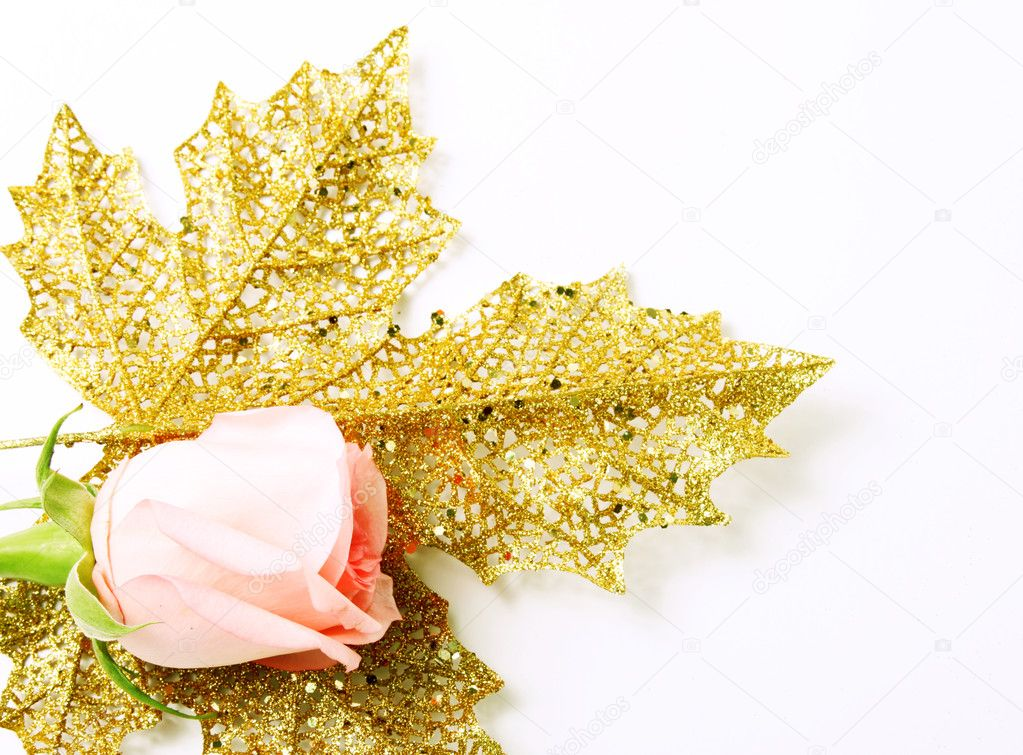 A pink rose on a gold leaf on white background. Space to insert text or design — Lizenzfreies Foto #2543449