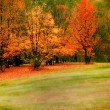 colorful autumn trees — Stock Photo