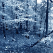 The Blue Forest — Stock Photo