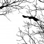 Bird Flying — Stock Photo #2355073