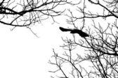 Bird Flying — Stock Photo