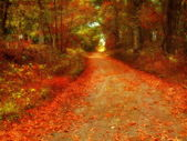 Colorful Autumn Road — Stock Photo
