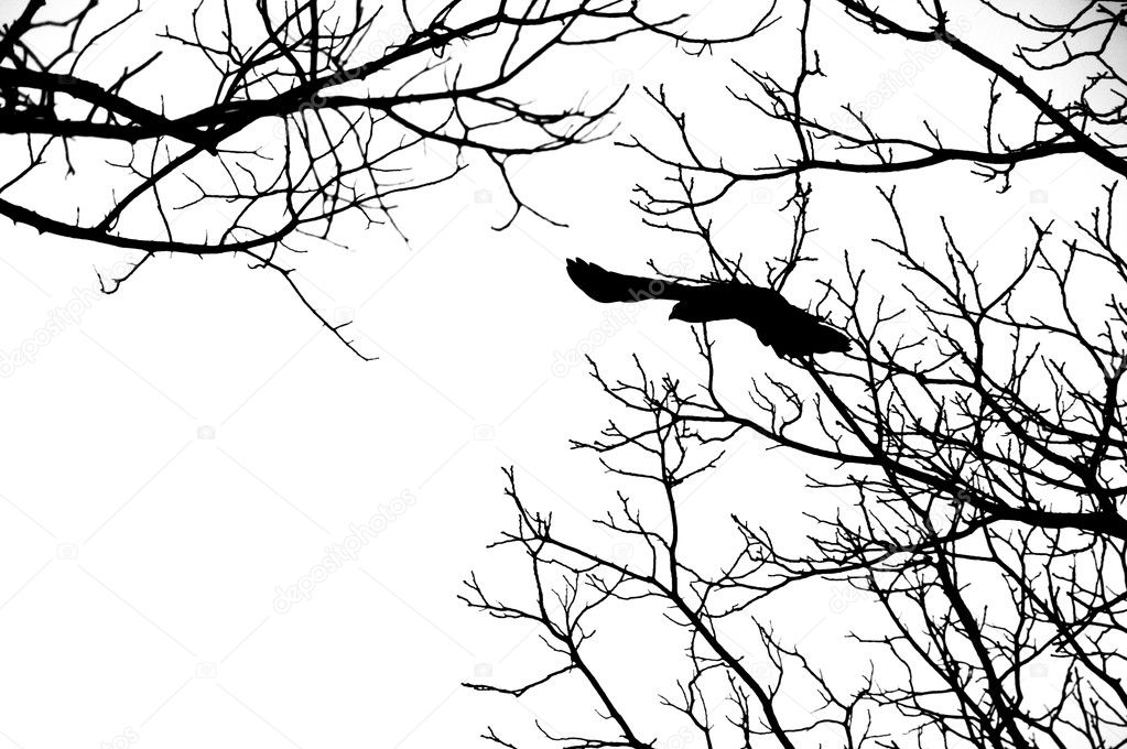 Flying Birds Silhouette Tree Silhouette of Bird Flying Off