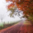 Misty Autumn Morning Trees - Stock Photo