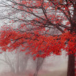 Misty Autumn Morning Trees — Stock Photo #2369068