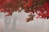 Misty Autumn Morning Trees — Stock Photo