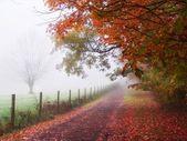 雾的秋天早晨树 — 图库照片