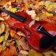 Violin in Autumn Leaves — Stock Photo #2397112