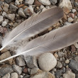 Royalty-Free Stock Photo: Feathers and Stones