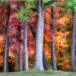 Autumn Colorful Trees — Stock Photo
