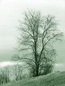 Tree — Стоковое фото